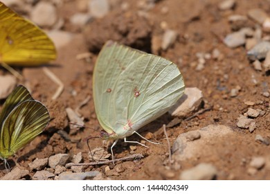 green butterfly in national park thailand