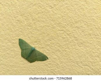 Green Butterfly on the wall / Background