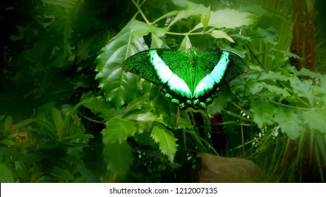 Green Butterfly - Perfect Camouflage