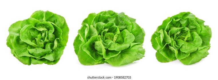 Green butterhead lettuce isolated on white background.