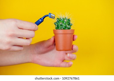 green cactus in a brown pot and a razor on a yellow background. the concept of depilation, epilation and removal unwanted hair on the body