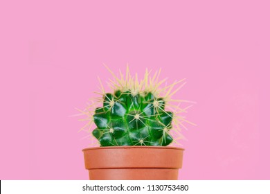 green cactus in a brown pot and a razor on a pink background. the concept of depilation, epilation and removal unwanted hair on the body