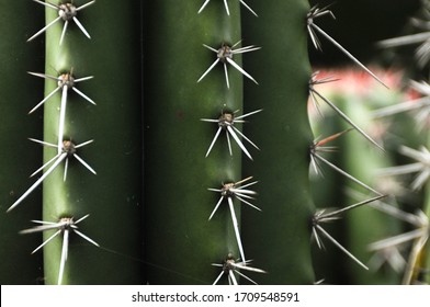 A green cactus close up with sharp white spikes in it and more cactus in the background in nature
