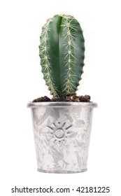 green cactus in metal flower pots on white background