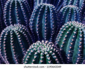 Green cactus pattern background image