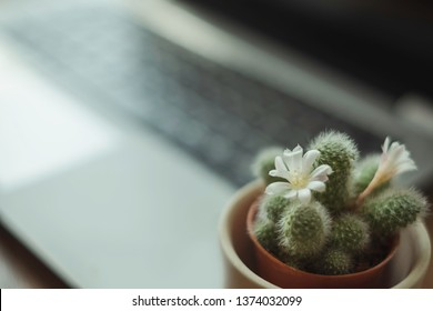 Green cactus plant in ceramic pot &notebook computer. The cacti has white blossom flower. Its an office/home plant as it can absorb EMF radiation. Eco friendly office and healthy environment concept.