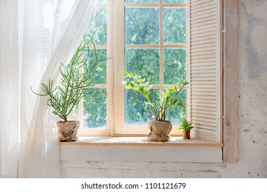 Green cactus, succulents on the windowsill with light soft background. Spring or summer greeting card. Home plants on the windowsill
