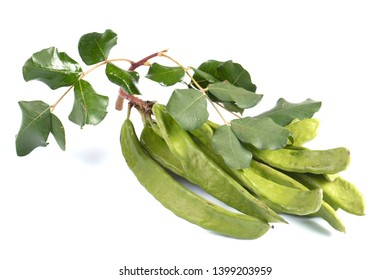 Green carob pods isolated on white background.Ceratonia siliqua, commonly known as the carob tree or carob bush. Harnup tree.Healthy organic sweet carob pods with seeds and leaves.Healthy eating