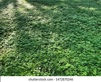 Green carpet of grass in a city park among the trees