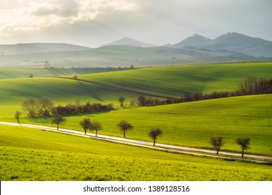 Green carpet, South moravia fields, Czech republic