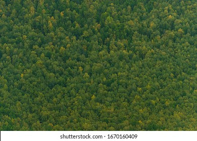 green carpet of trees on hillside, dense coniferous forest as background