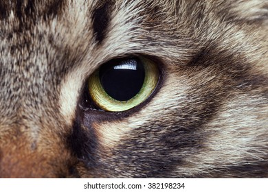 Green cat eye looking straight in camera