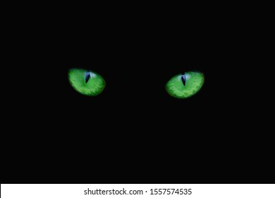 Green cat eyes on a black background. Two eyes of a cat are looking straight. Close-up.
