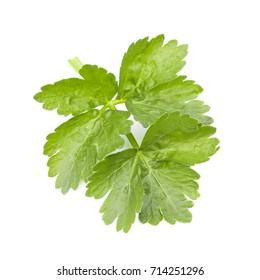 Green Celery Leaves
