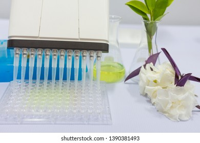 Green Chemistry, Medicinal Herbs and Drug in  Experiment using equipment and laboratory glassware such as Erlenmeyer flasks, Micropipettes, Eppendorf tubes, Microplate and Pipette tip.