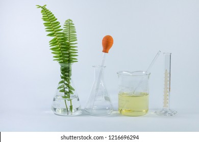 Green chemistry, Plant was extracted in chemical research with equipment and glassware