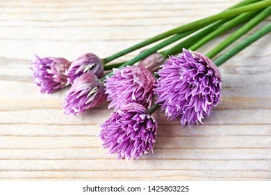 Green chives or allium in bloom with purple violet flowers and green stems on a wooden table, Chives is a edible herb for use in the kitchen.