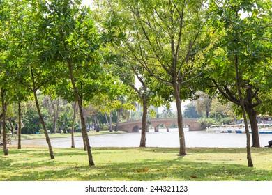Green city park   and beautiful tree