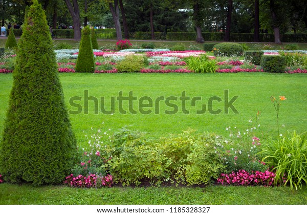 Green clipped manicured lawn with pyramidal bush. Space for your text