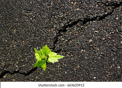 A green close up sprout on a gray asphalt, leader concept, texture background