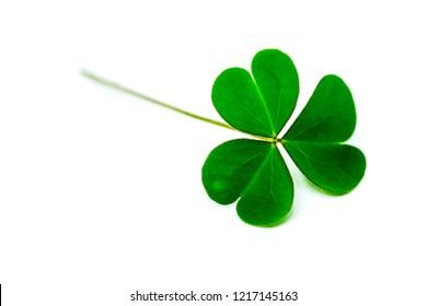 Grünes Kleeblatt einzeln auf weißem Hintergrund. mit dreiteiligen Schamfelsen. Feiertagssymbol von St. Patrick.