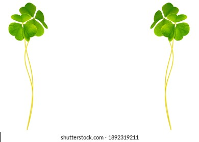 green clover leaves isolated on white background. St.Patrick 's Day. foliage