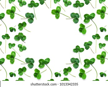 Green clover, the symbol of the holiday St. patrick's day. Frame of clover leaves isolated on white background, top view, flat lay.