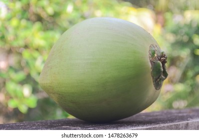 Green coconut fruit  with garden background
