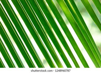 green coconut leaf pattern