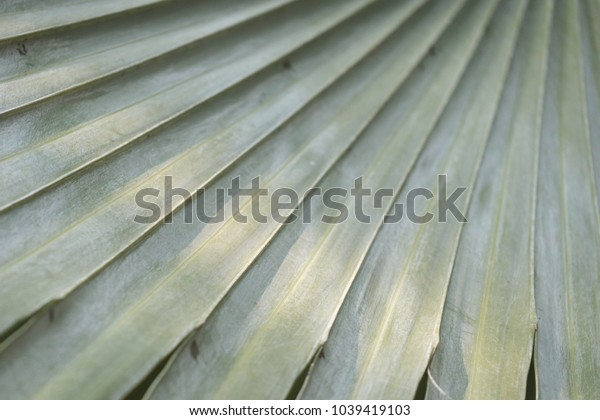 green coconut leaf with sunlight textures background.