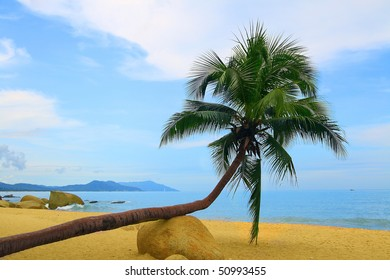 a green coconut palm tree at beach