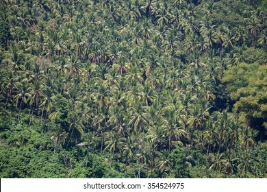 Green coconut trees on the mountain backdrop, Philippines