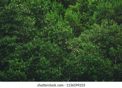 green color of tree background