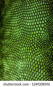 Green Coloured Real Snake Skin Snakeskin Animal Print Background