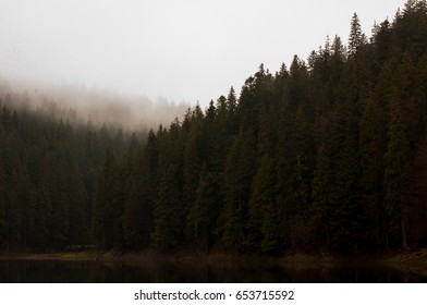 green coniferous forest in the morning fog