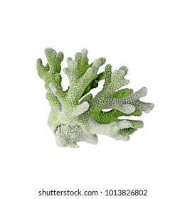 green coral isolated on white background