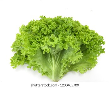 Green coral lettuce over white background. Creative Concept. Copy Space.
