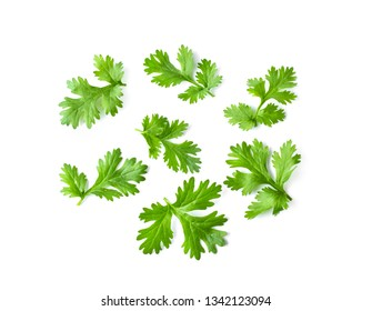Green coriander leaves close-up, isolation on a white background. top view