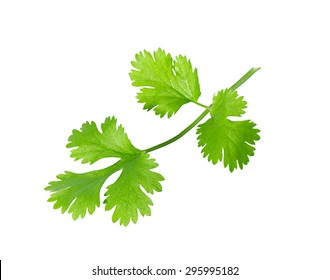 Green coriander leaves close-up, isolation on a white background.