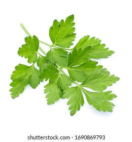 green coriander leaves on a white background