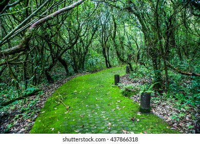 Green corridor in forest green.