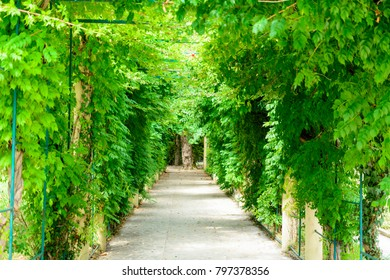 Green corridor with light