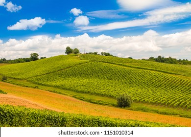 Green countryside landscape in Daruvar region, Croatia, vineyard on hills