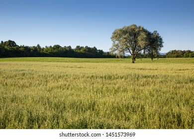 Green countryside landscape with tree