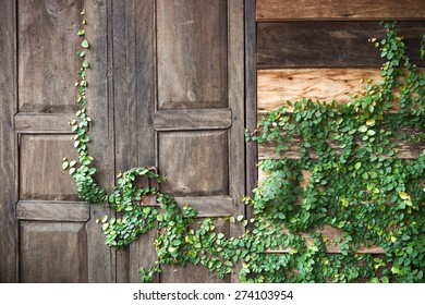 Green creeper plant growing on wooden wall and a door of a house