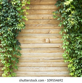 Green creeper plant, plank wall  background