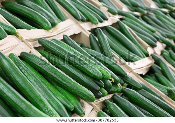 green, cucumbers, on shelf, supermarket. Pile of fresh green cucumbers