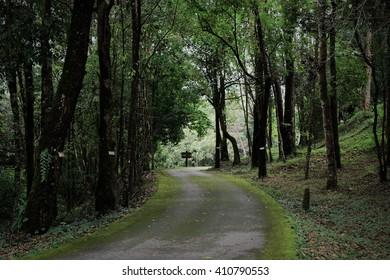 Green and dark road.