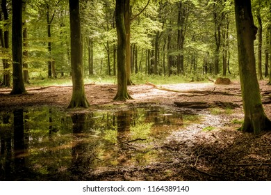 Green deciduous forest in bright morning light
