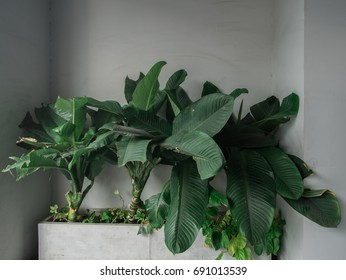 Green decoration tree on cement pot with some dry leaves